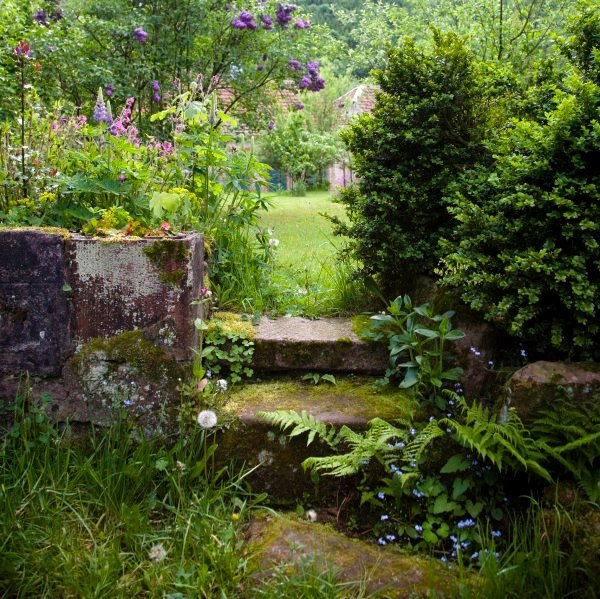 iStock_000006171532_Large - Natural-Wild Garden - web