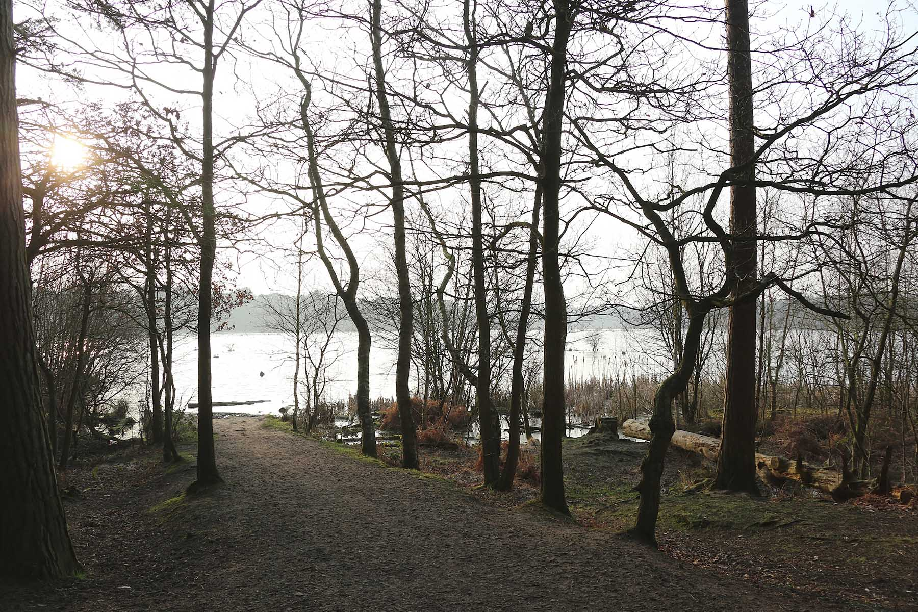 Scenic walk through Delamere Forest