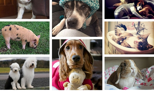 Favourite pets from 2014(1)